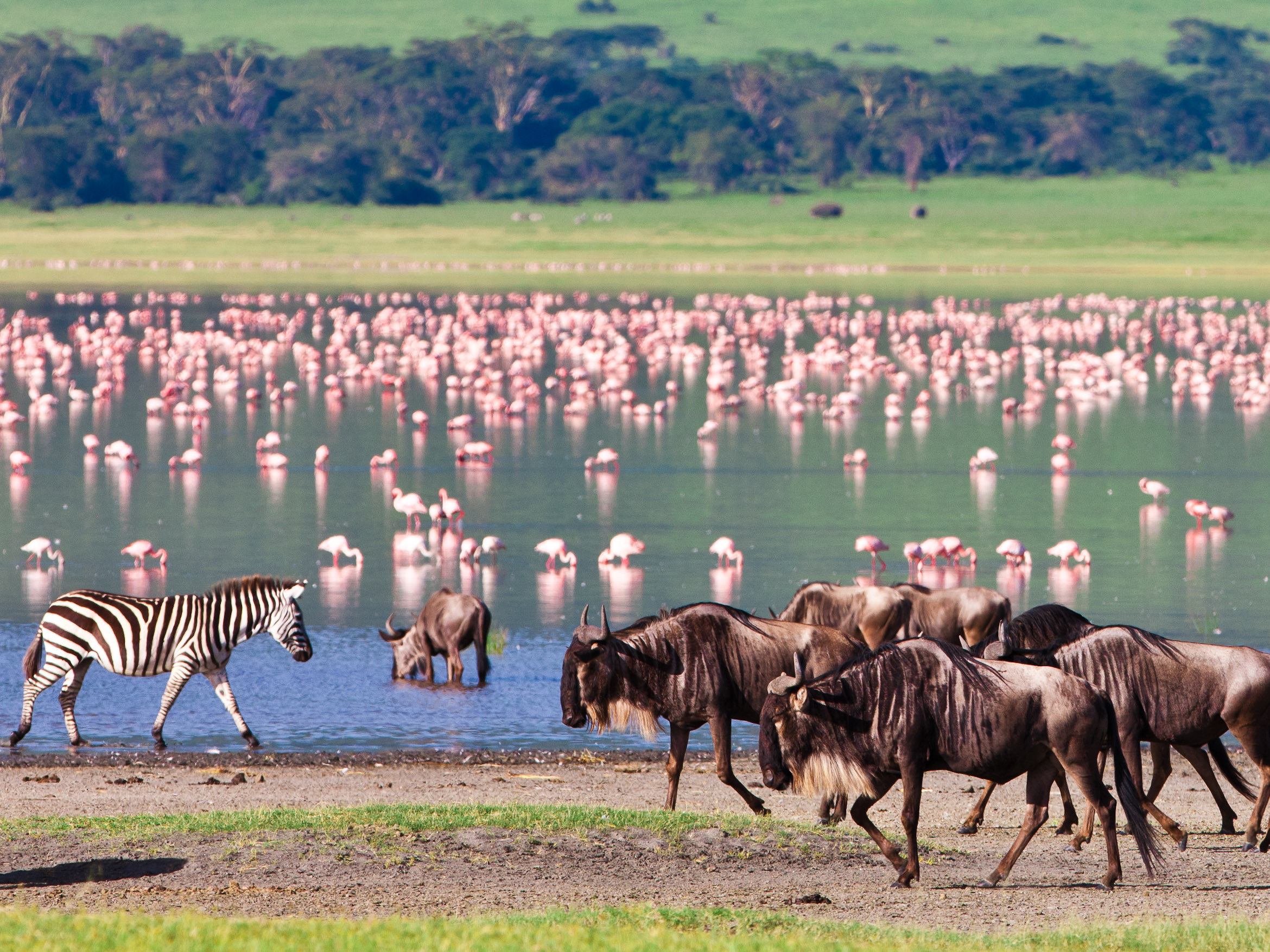 school_expedition_tanzania_impact_wilderbeest__flamingo