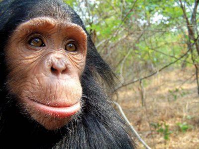 school_expedition_uganda_trek_baby_chimp