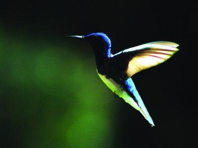 school_expedition_ecuador_scuba_flying_hummingbird