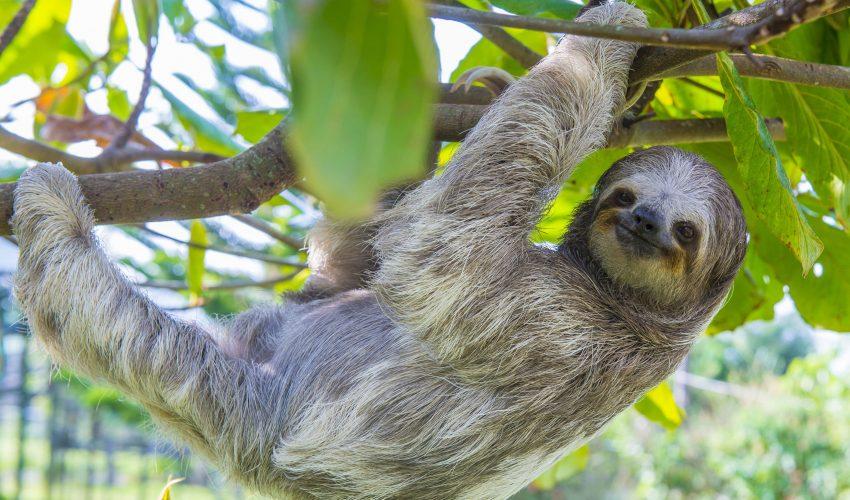 school_expedition_costa_rica_scuba_sloth