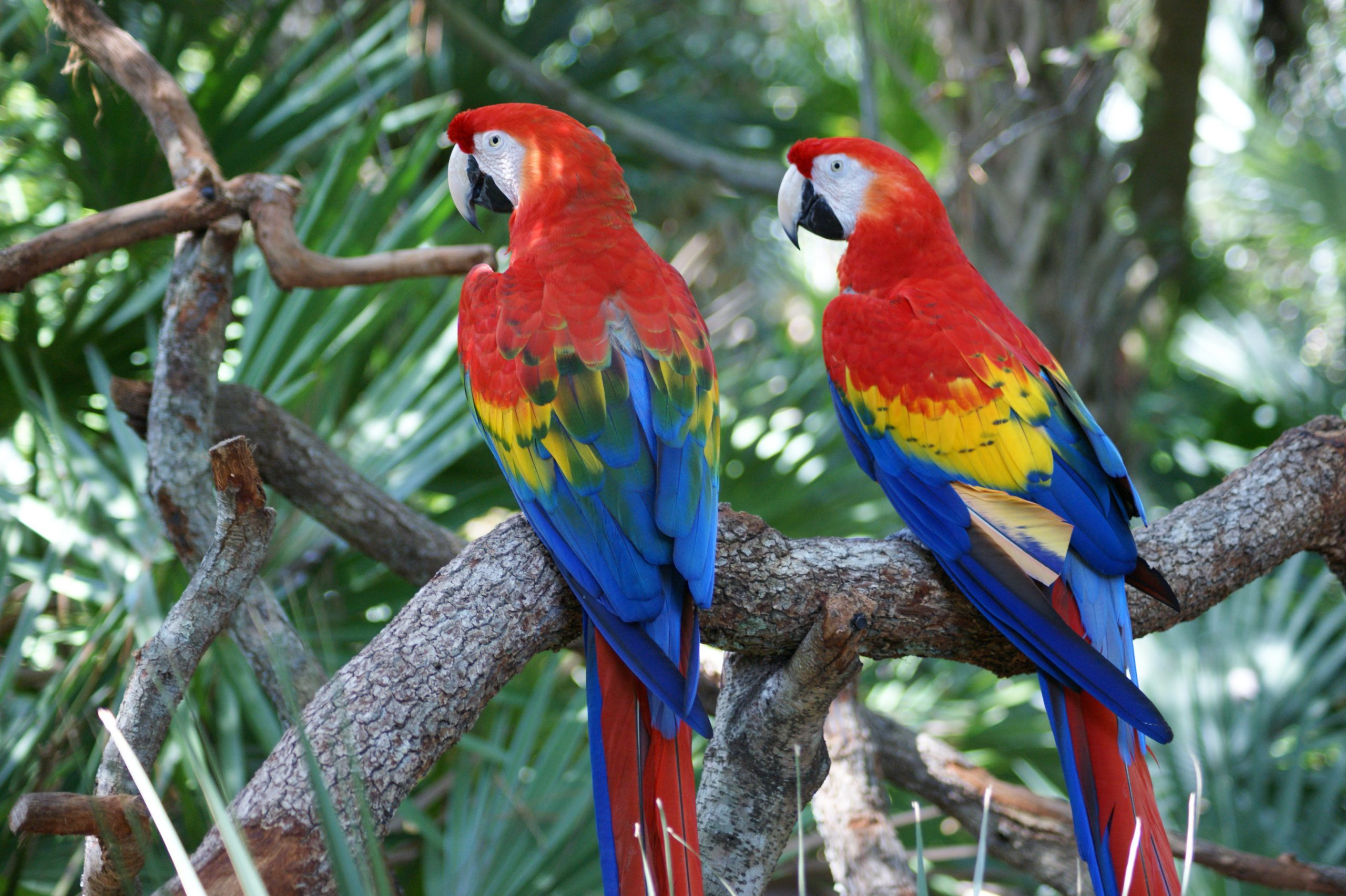 school_expedition_ecuador_galapagos_macaw_parrots