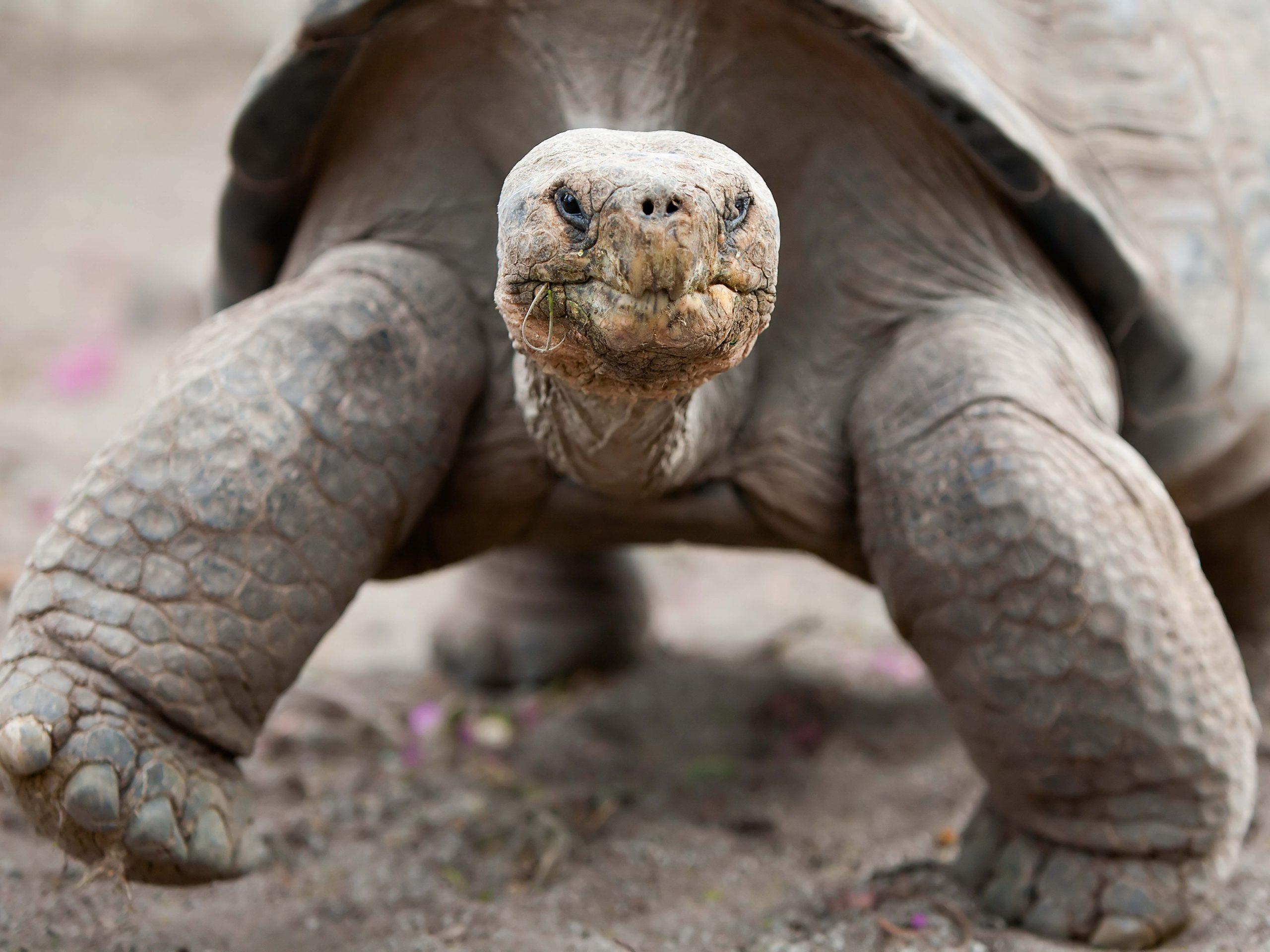 school_expedition_ecuador_galapagos_giant_tortoise