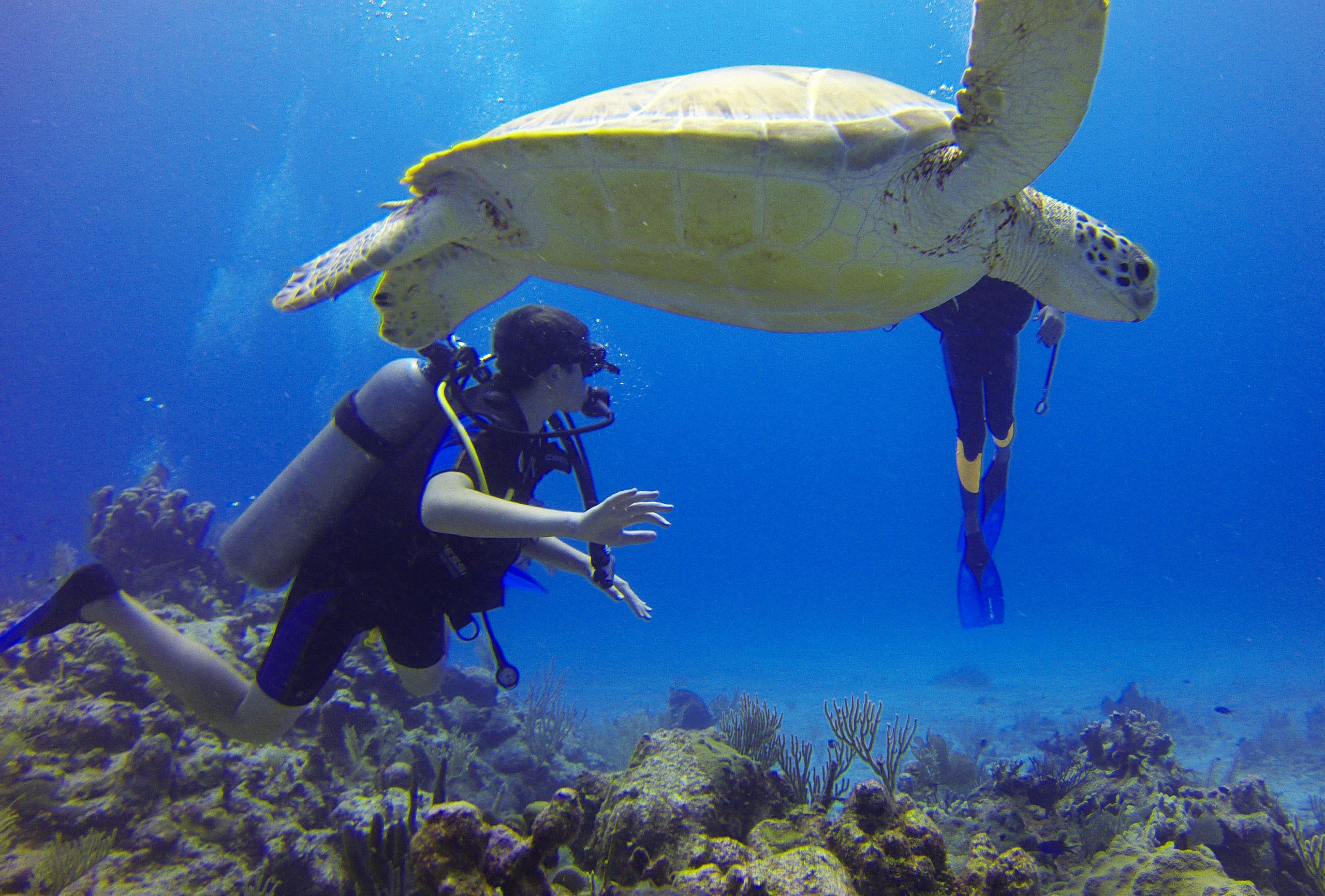 school_expedition_kenya_scuba_diving_with_turtle