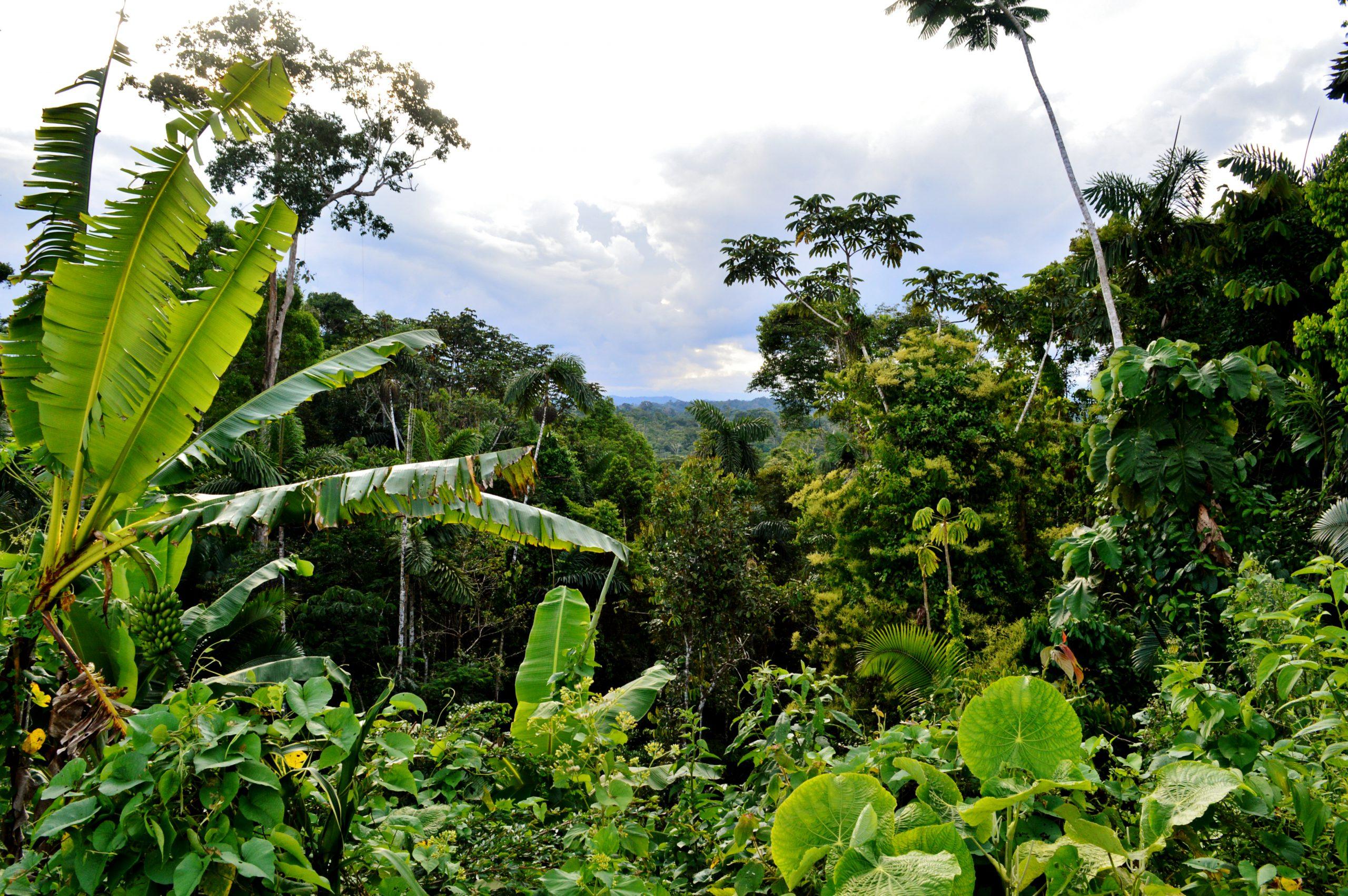 school_expedition_ecuador_trek_jungle_views