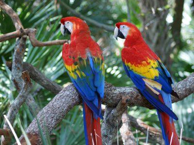 school_expedition_ecuador_trek_macaw_parrots