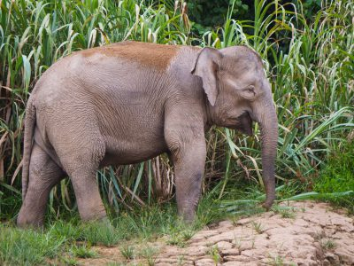 school_expedition_borneo_scuba_asian_elephant