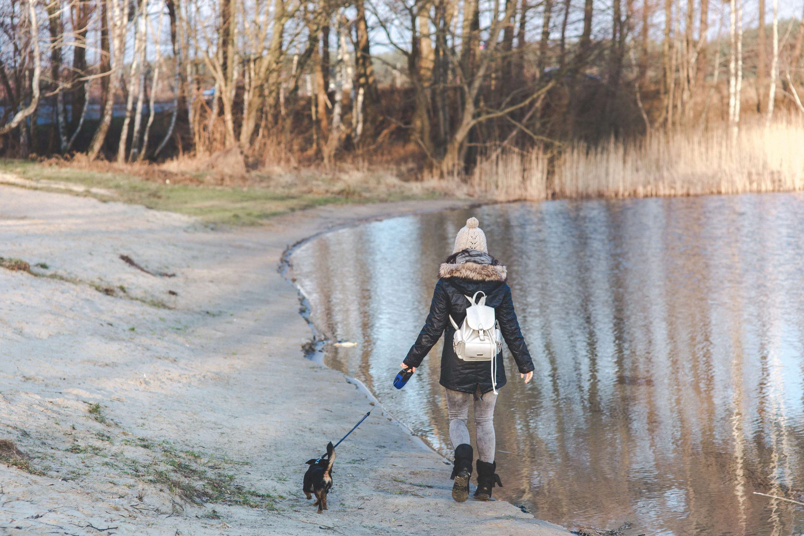 school_expedition_fundraising_dog_walking-1