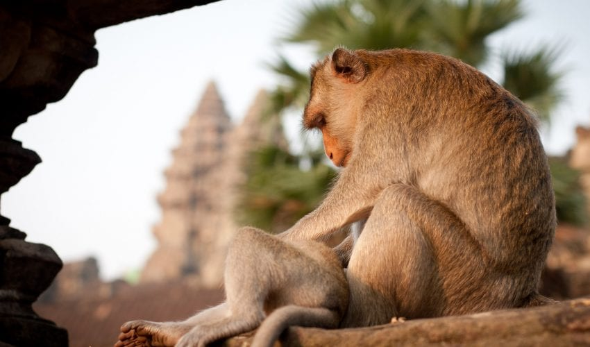 school_expedition_cambodia_impact_angkor_wat_monkey