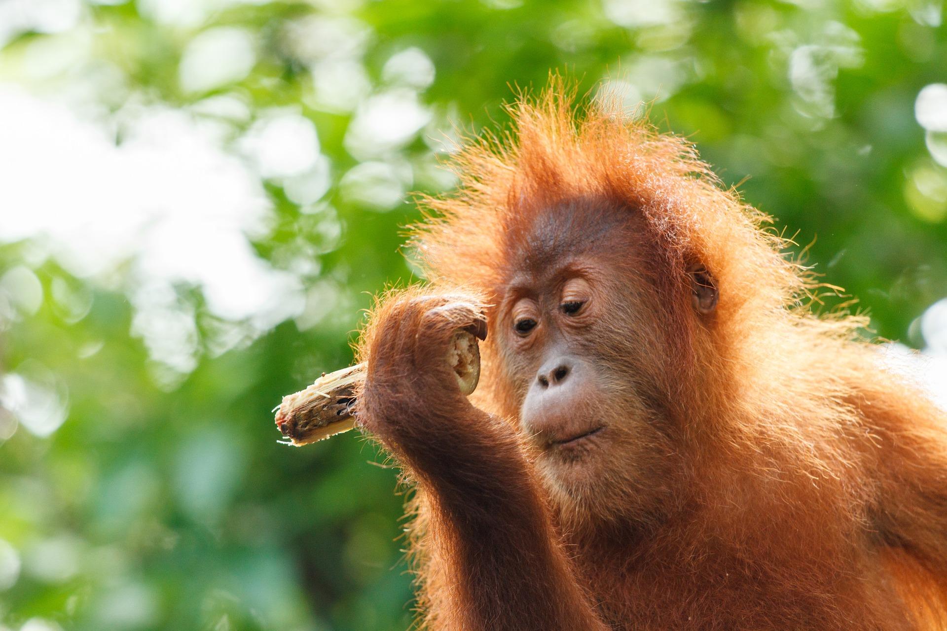Borneo Impact Expedition