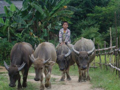 school_expeditions_northern_thailand_adventure_boy_buffalo