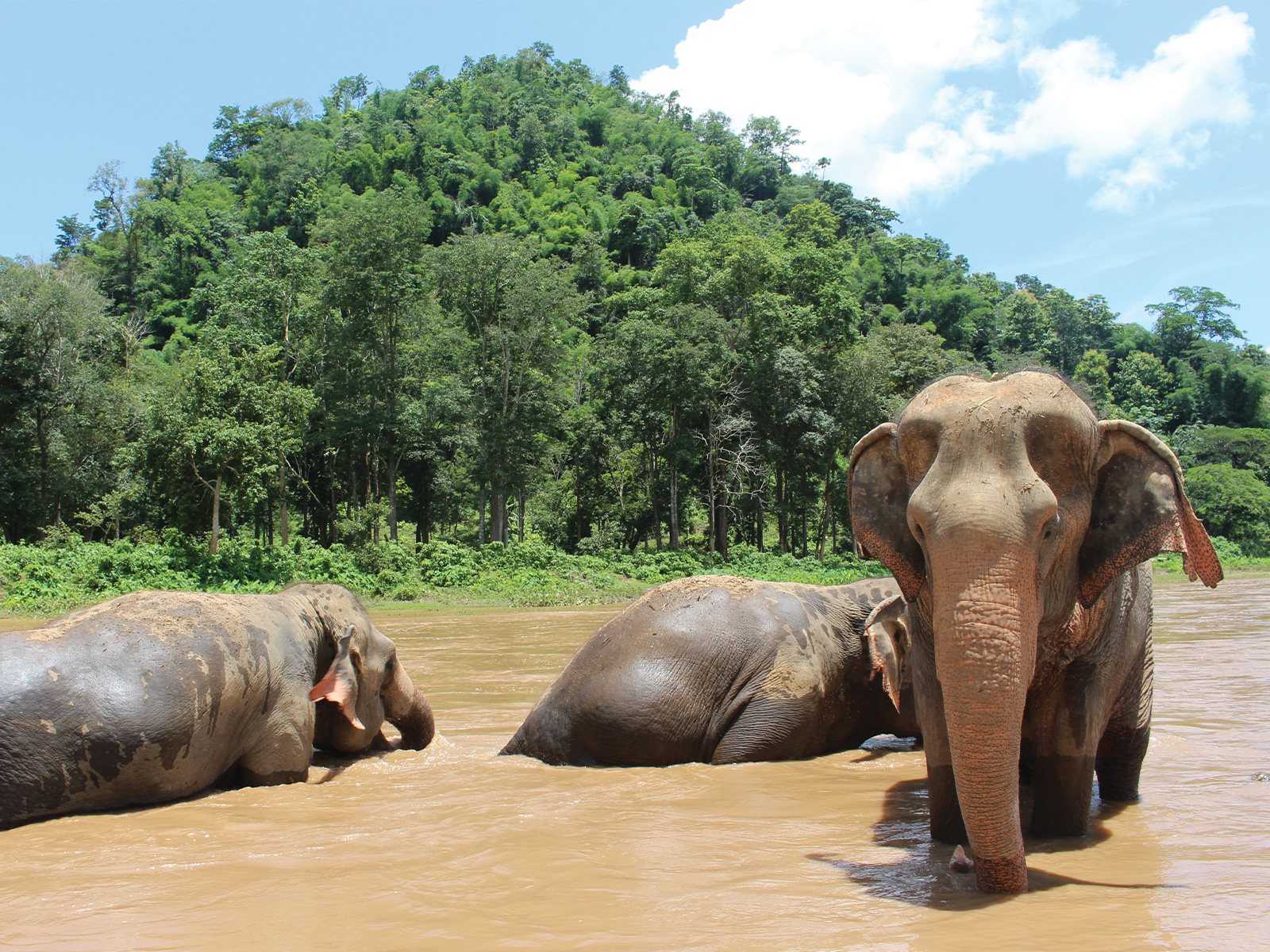 school_expeditions_thailand_chiang_mai_asian_elephants