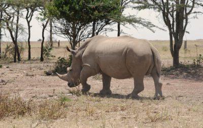 camps_international_ziwa_uganda_wildlife_projects-scaled