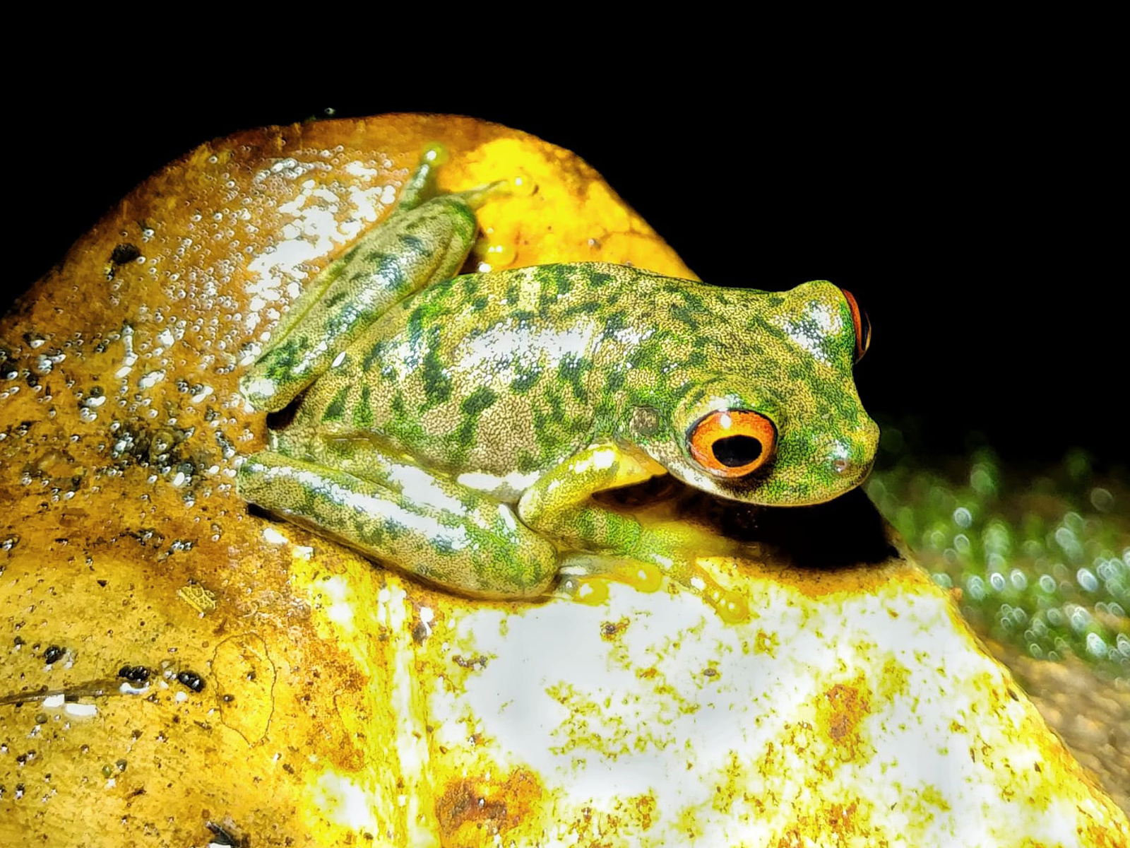 school_expedition_costa_rica_impact_frog_on_leaf