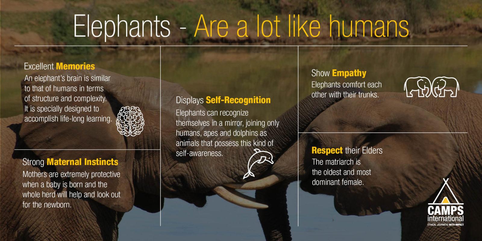 Infographics of Elephants - are a lot like human facts